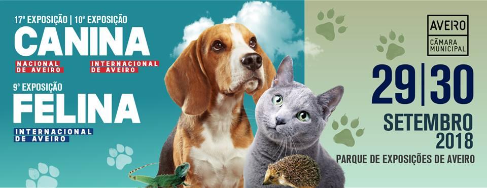 exposição canina e felina 2018